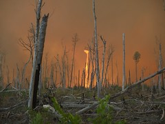 The 2011 Lateral West wildfire at Great Dismal Swamp NWR. Credit: Greg Sanders/USFWS