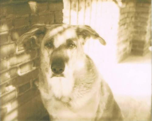 polaroid pup