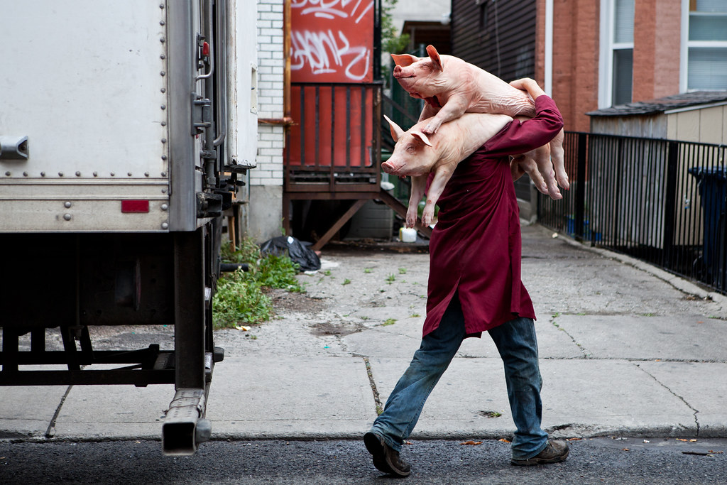 man carrying two dead pigs in chinatown toronto