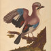 A natural history of British birds