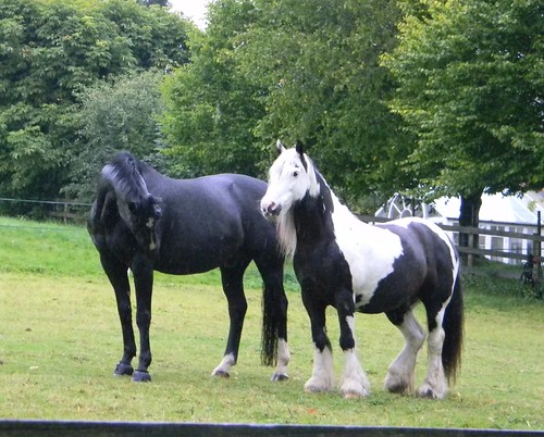 Distinctive horse