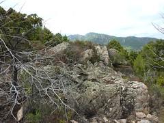 Sentier de Cuperchjata Sud depuis la piste de l'Osu : la plate-forme rocheuse près du rocher remarquable (fin de la sente de chasseurs)