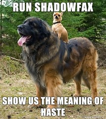 RUN SHADOFAX - SHOW US THE MEANING OF HASTE