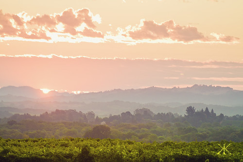 california sky cloud sun nature sunrise canon eos vineyard wine telephoto 7d 75300