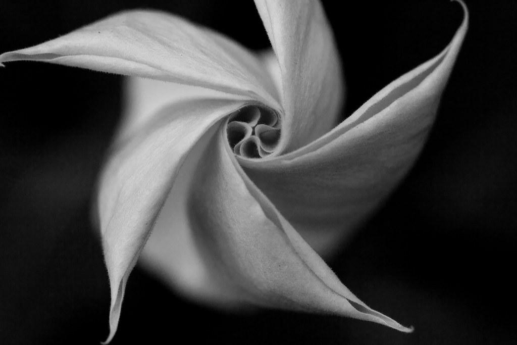 Spiral Flower [Explore]