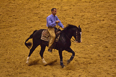 rodeo(0.0), english riding(0.0), western riding(0.0), team penning(0.0), western pleasure(0.0), mustang horse(0.0), jockey(0.0), barrel racing(0.0), animal sports(1.0), equestrianism(1.0), stallion(1.0), equestrian sport(1.0), sports(1.0), traditional sport(1.0),