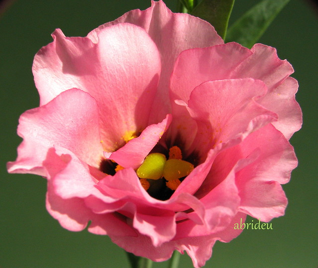 picture of pink - photo #28