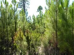 Piste de Castellu Muratu : vers la fin de la piste le long du ruisseau du Paisellu