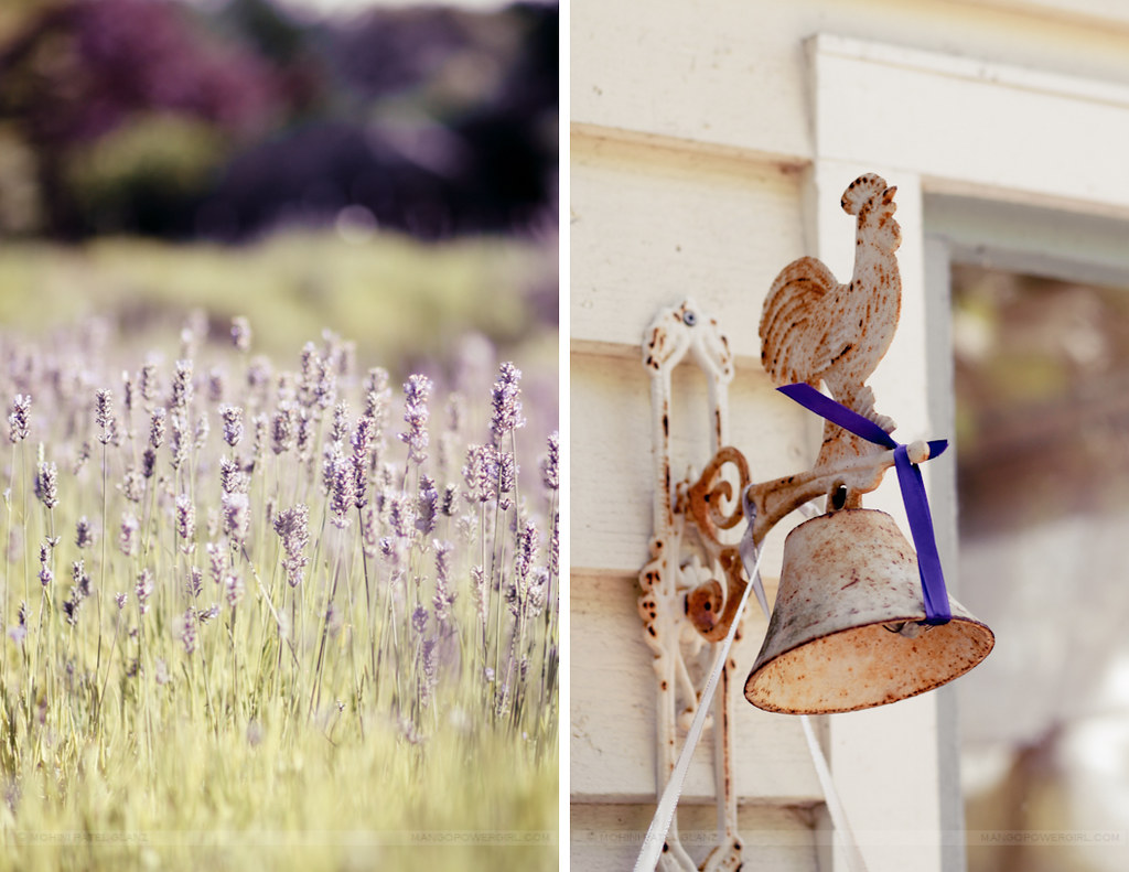 lavender hill farm 11