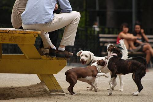 Tompkins dog run