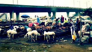Goat Market - Lagos, Nigeria