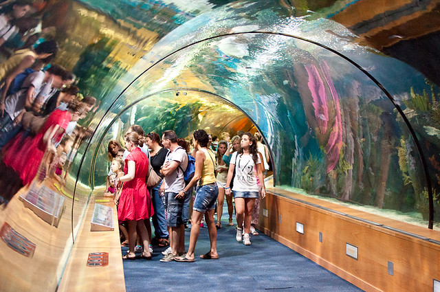 Visita al Oceanográfico de la Ciudad de las Artes y las Ciencias de Valencia