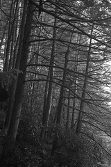 Nay Aug Park III BW