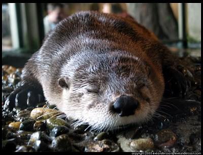 henri the otter of ennui