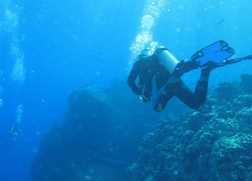 Diving is something Australia can offer lots of
