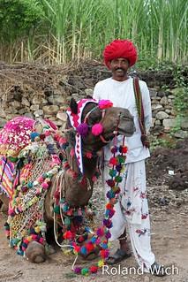 Ranakpur - Camel for Ride