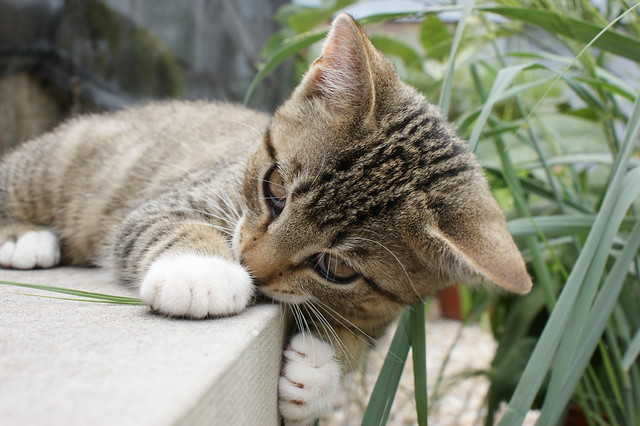 Playful garden kitten (1)