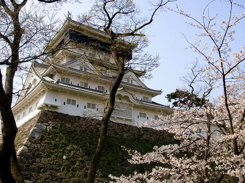 castle japan sakura kitakyushu kokura