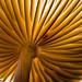Under the mushroom by citrusjig