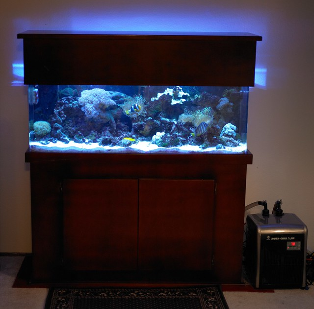 Cheap chillers for small reef tank for Discount fish tanks