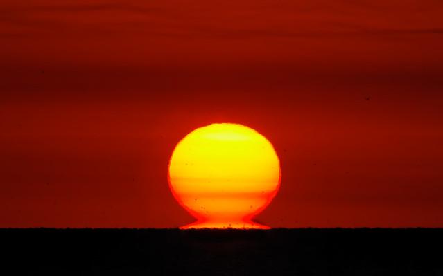 Omega Sunrise 2011