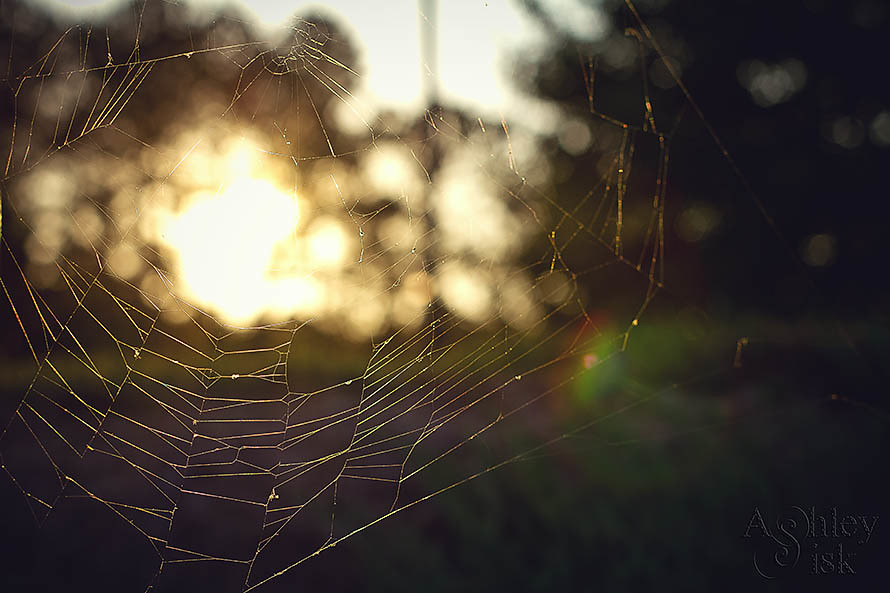 Spiderweb in the Sun RS