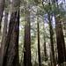 Portola-Redwoods-2011-08-27