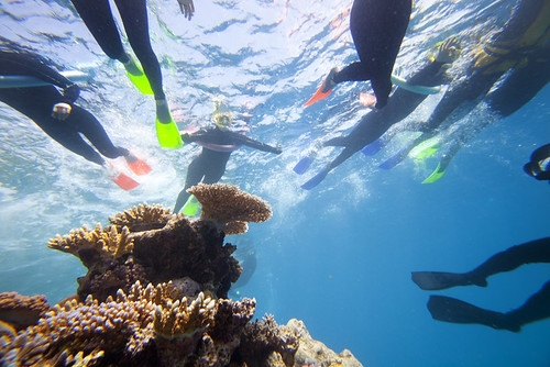 Great Barrier Reef Experience