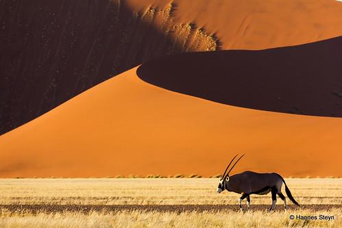 africa nature animals fauna canon sand 2000 desert wildlife dunes explore antelope getty mammals namibia reserves oryx sossusvlei namib namibdesert interestingness170 i500 550d gemsbuck hannessteyn spiritofphotography canonefs18200mmf3556is canon550d eosrebelt2i namibnaukliftpark extraordinarilyimpressive gettyimagesmeandafrica1 explore20110901