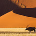 Oryx and the Sossusvlei Dunes by hannes.steyn