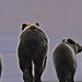 Bear Behinds by Daryl L. Hunter - Hole Picture Photo Safaris