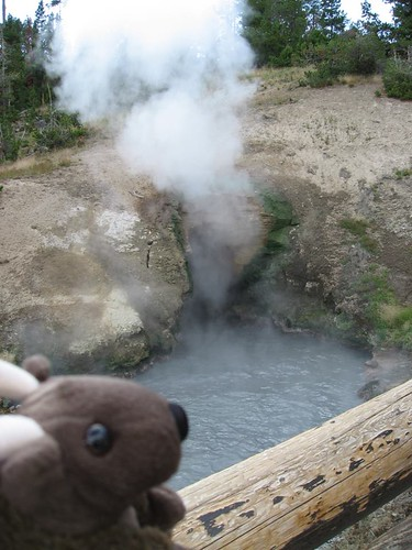 Buddy Bison at Dragon's Mouth Spring in Yellowstone National Park