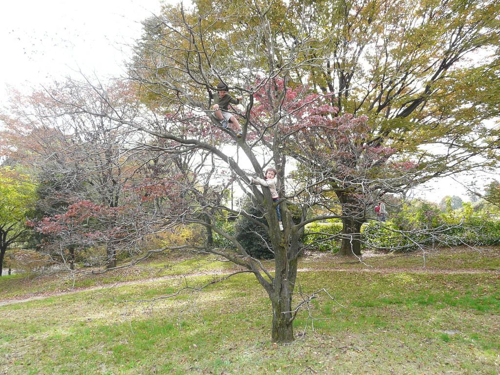 Tree Climbing | 木登り