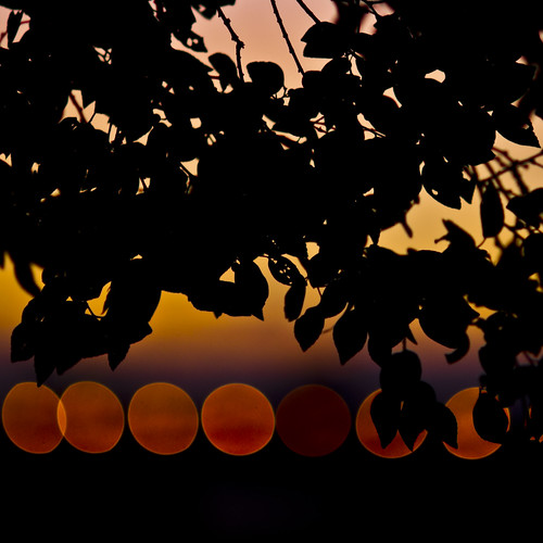 sunset silhouette tokyo bokeh 東京 多摩川 夕焼け tamagawa シルエット