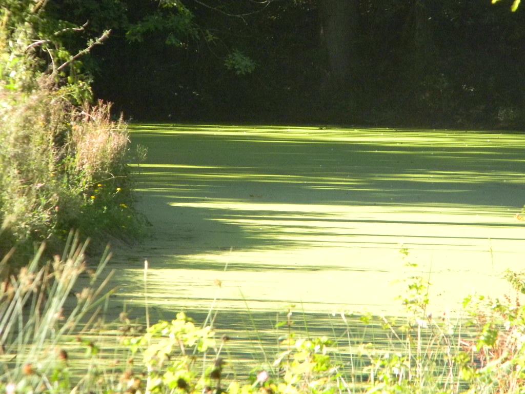 Pond Ashurst Circular