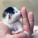 An abandoned newborn kitten.