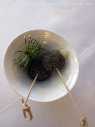 squirrel, douglas fir pine, apple, hazelnut