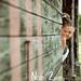 mariage_photos_couple_beuvron_en_auge09