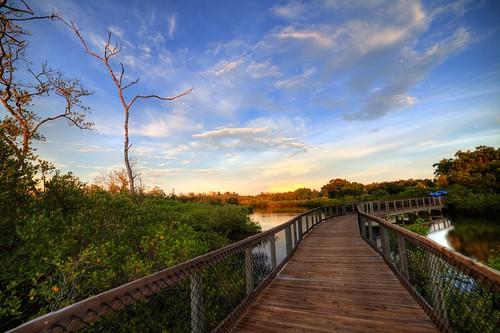 park trees sky water clouds point emerson high dynamic florida walk board swamp boardwalk fl range hdr bradenton palmetto