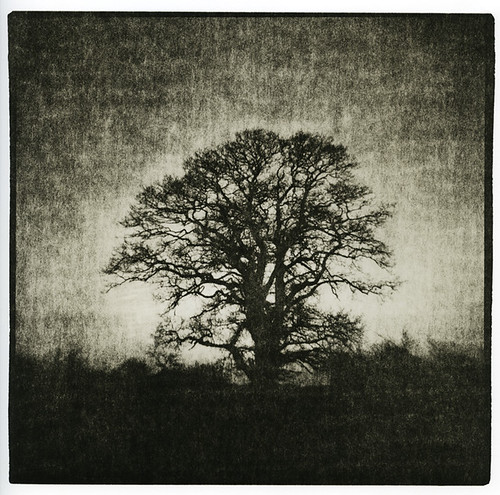 A Tree in a field... (Lith Print)