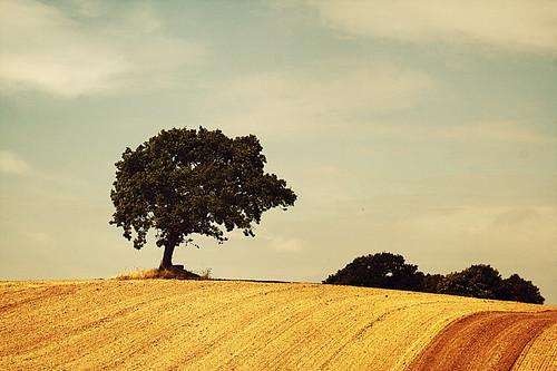 blue sky brown tree green yellow clouds canon vintage denmark scenery serenity fields danmark calmness 400d ljosmyndakeppni johanningi