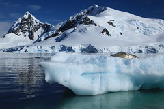 Iceberg with Crabeater Seal in Paradise Harbour, Antarctica