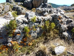 Sommet du Castellacciu : les murs du castellu