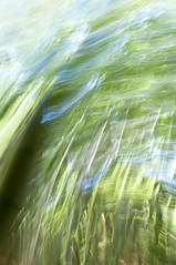 Impression, Bamboo Forest - Quinta