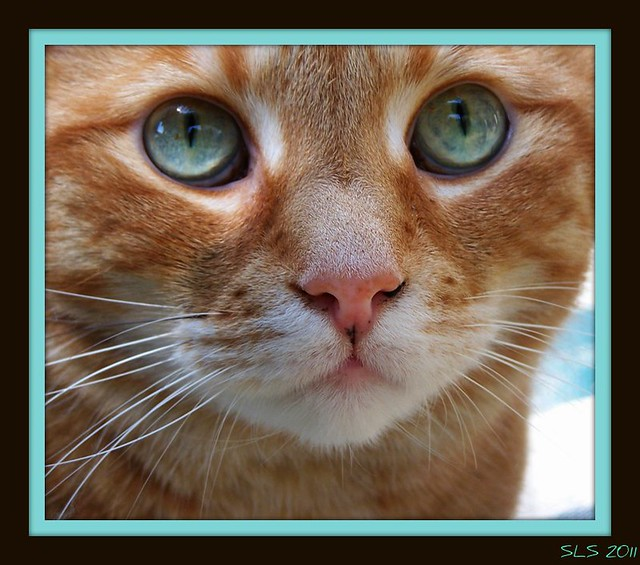 """""""Who can believe that there is no soul behind those luminous eyes!"""" - Theophile Gautier"""