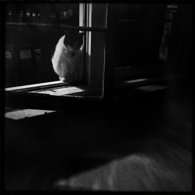 Film noir cat