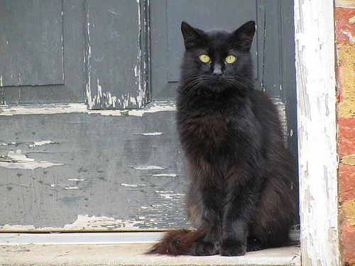 door black brick nature animal cat concrete mammal virginia feline peeling paint frame cartersville sociable cumberlandcounty congenial platinumheartaward littletykedoorway