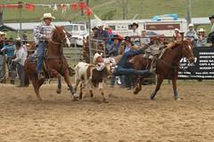 equestrian sport(0.0), reining(0.0), fair(0.0), barrel racing(0.0), animal sports(1.0), rodeo(1.0), western riding(1.0), event(1.0), sports(1.0), western pleasure(1.0), charreada(1.0),