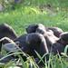 zoo praha 309 by katka789