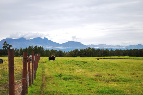 Musk Ox Farm in Palmer, AK